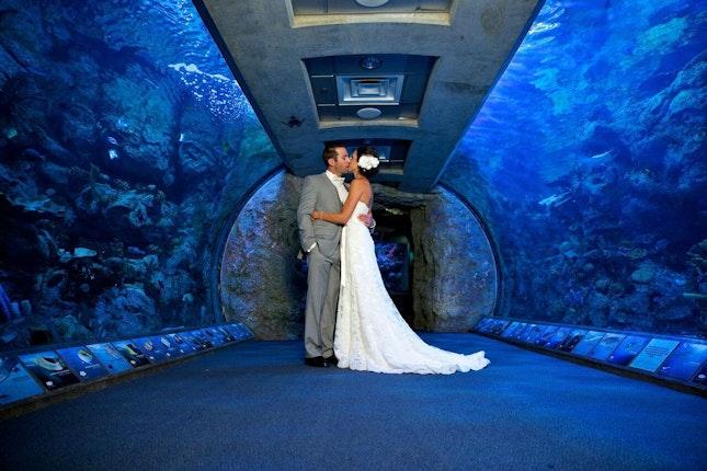 Aquarium Of The Pacific Long Beach California 12
