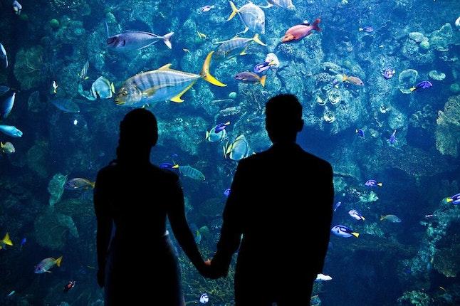 Aquarium Of The Pacific Long Beach California 2