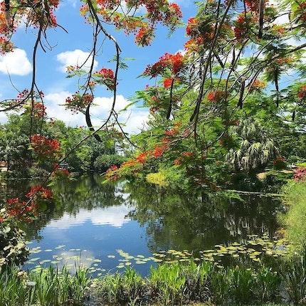 Mounts Botanical Garden Of Palm Beach County Wedding Venue