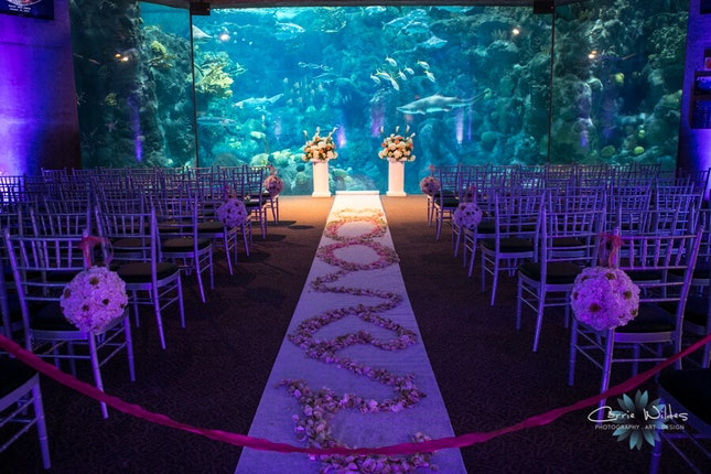 The florida aquarium weddings tampa bay wedding venue tampa florida the florida aquarium tampa florida 2 junglespirit Gallery