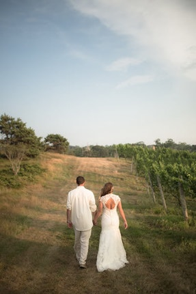 Truro Vineyards Of Cape Cod Machusetts 2