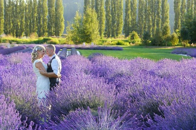 Woodinville Lavender Redmond Washington 1