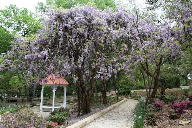 Zilker Botanical Garden Weddings Austin Wedding Venue Austin Tx 78746